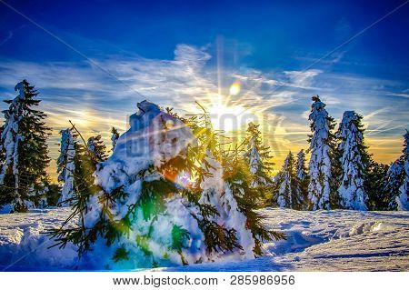 Eautiful Sunrise On The Czech Mountains. The Sun Shines Through A Tree Covered With Snow.