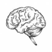 Human brain schematic vintage sketch engraving vector illustration. Scratch board style imitation. Black and white hand drawn image. poster