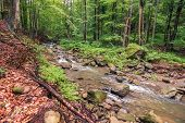 river in the forest. trees, rocks and fallen foliage on the riverbank. freshness of beautiful nature scenery. beautiful background. summer overcast day. poster