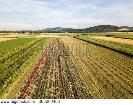 Aerial Drone Image Of Fields With Diverse Crop Growth Based On Principle Of Polyculture And Permacul