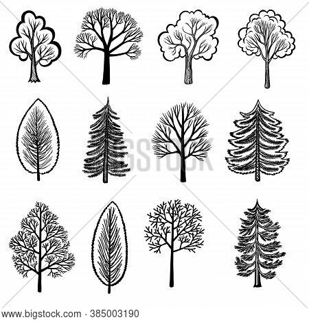 Stylized Black Tree And Shrub Silhouettes Isolated On White Background. Decorative Set Of Vector Fir
