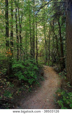 Oak Creek hiking trail