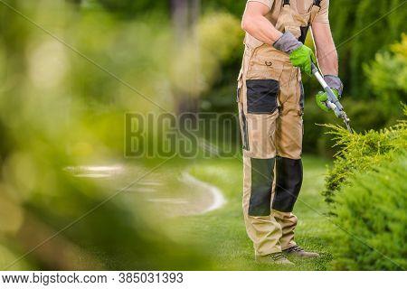 Topiary Garden Plants Trimming Job. Caucasian Professional Gardener With Scissors Trim Shrubs. Lands