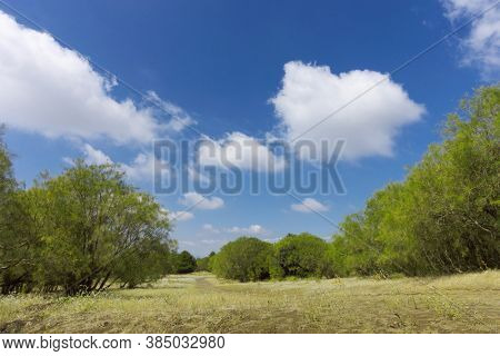 landscape of broom trees in a clearing of Etna Park below cumulus clouds, natural landmark of Sicily tourism