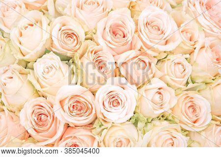 Rose Flower Background. Colorful Roses Flower. Roses Flower Bouquet. White Rose.