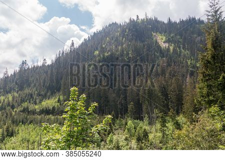 Hill With Trees In Tatra National Park In Poland.
