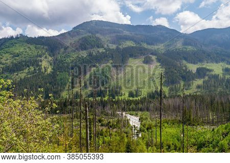 Landscape View With Hill With Trees In Tatra National Park In Poland.