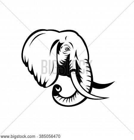 Stencil Illustration Of Head Of An African Elephant, Loxodonta, African Bush Elephant Or African For