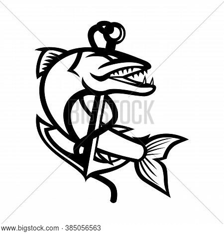 Mascot Black And White Illustration Of Great Barracuda, A Saltwater Fish That Is Snake-like With Fea