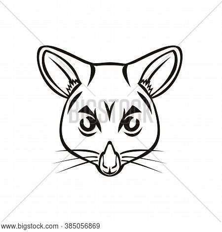 Mascot Illustration Of Head Of A Common Brushtail Possum Trichosurus Vulpecula, A Nocturnal, Semi-ar