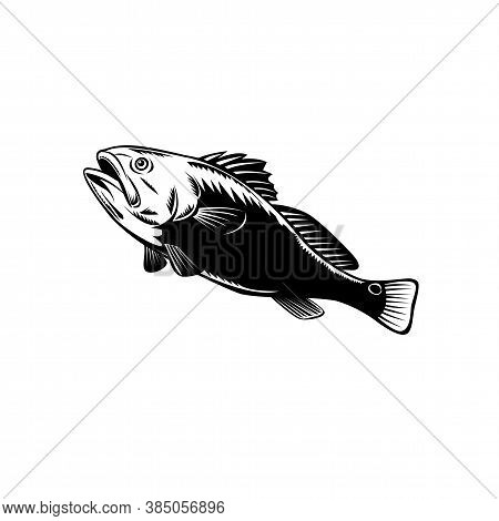 Woodcut Illustration Of A Red Drum, Redfish, Channel Bass, Puppy Drum Or Spottail Bass, A Game Fish