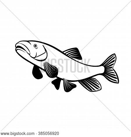 Retro Style Illustration Of A Shortnose Sucker,  A Rare Species Of Fish In The Family Catostomidae,