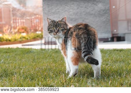 Surprised Expression Of A Domestic Cat. A Young Kitten Looks At His Intruder In Disbelief. Walk Thro