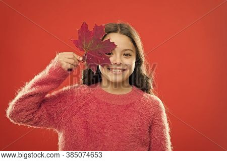 Small Girl Smiling With Maple Leaf. Maple Syrup Is Often Used As Condiment For Pancakes Waffles Oatm