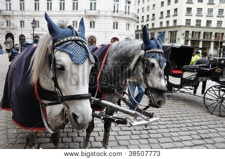 Spotted black and white horses and carriage on square are waiting for passengers poster