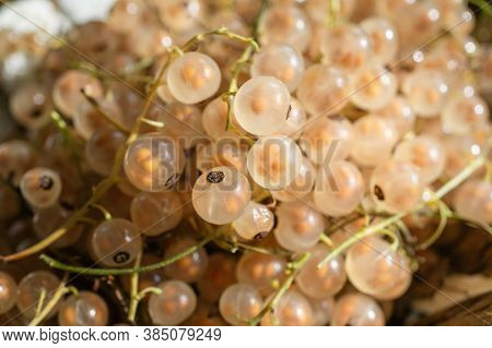 White Currant Close-up. White Currant Crop Is Prepared For Sale At The Market