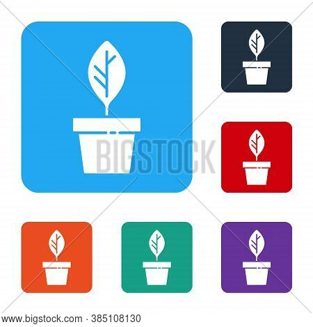 White Plant In Pot Icon Isolated On White Background. Plant Growing In A Pot. Potted Plant Sign. Set