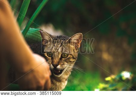 A Stray Cat Yells At A Mans Hand, A Stray Animal Needs Help