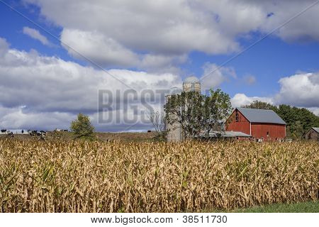 Corn And Dairy Farm