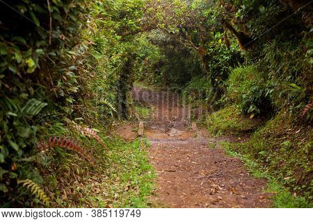 Path In The Monteverde Cloud Forest, Costa Rica