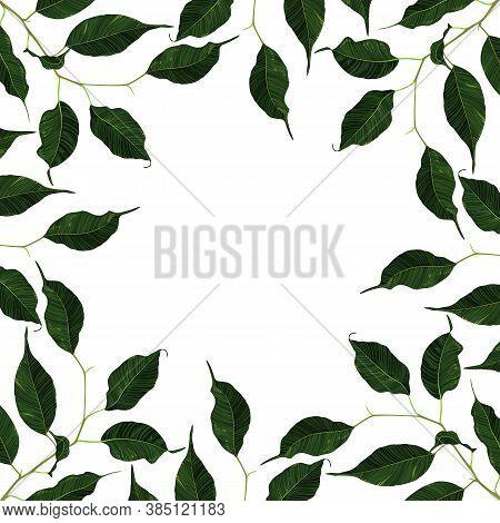 Green Ficus Rubber Plant Branch Leaf Frame Border Background Vector Art