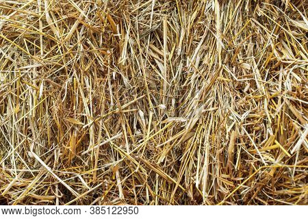 Hay Background. Texture Hay Closeup In Color. Fodder For Livestock And Construction Material. Dry St