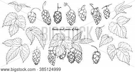 Leaves And Cones Of Hops, Hops Ingredient For Making Beer, Set Of Elemets For Design, Vector Illustr