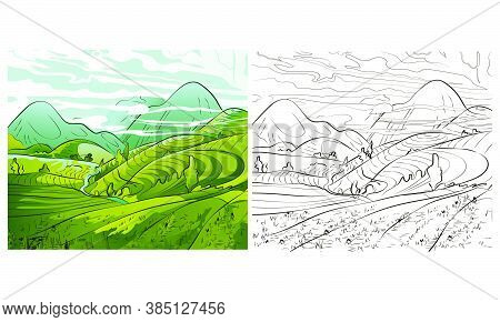 Rice Field Terraces In The Mountains Landscape, Vector Rice Or Tea Plantation On A Cascading Field O
