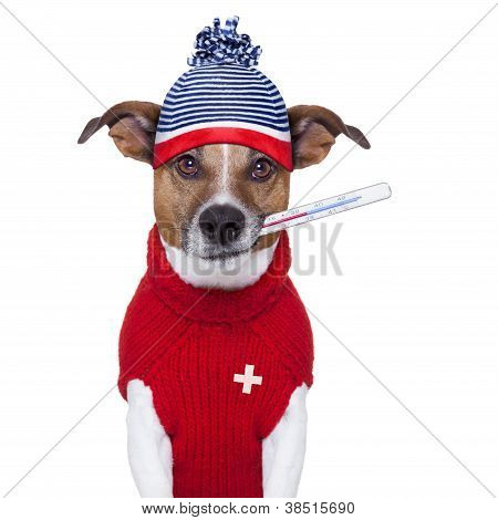 sick ill cold dog with fever and hat poster