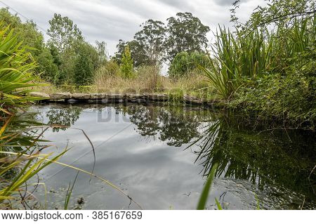 Reflections From A Countryside Pond, With Trees And Bushland. Dramatic Sky In The Background. A Peac