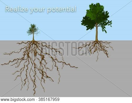 A Small Tree With A Big Root System Is Seen With A Big Tree With A Small Root System. The Type On Th