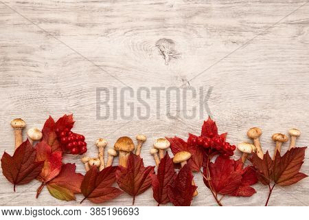 Autumn Background Frame. Red Leaves, Viburnum Berries And Fresh Mushrooms On Wooden Desk. Space For