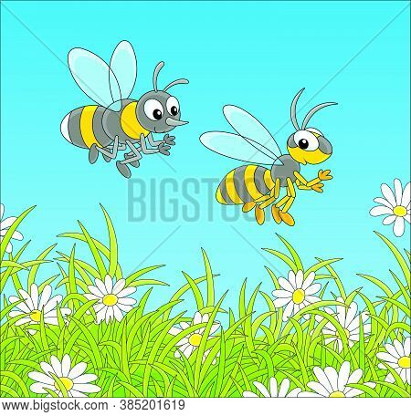 Striped Yellow And Black Bee And Wasp Buzzing And Flying Over A Green Field With Flowering White Cha