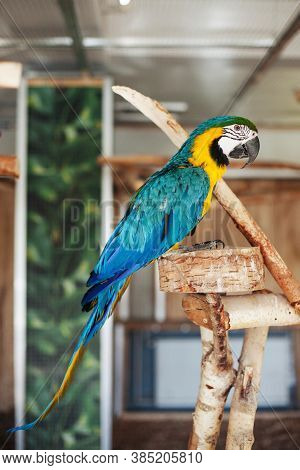 The Scarlet Macaw Bird. Ara Macao Animal. Blue And Yellow Bird Sitting On A Wooden Construction. Zoo