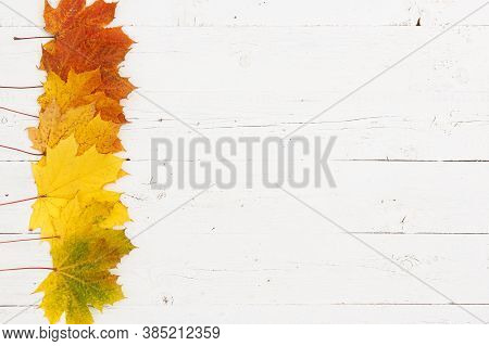 Multi-colored Maple Leaves Arranged In Colors With The Edge Of A White Textured Wooden Table. Colors