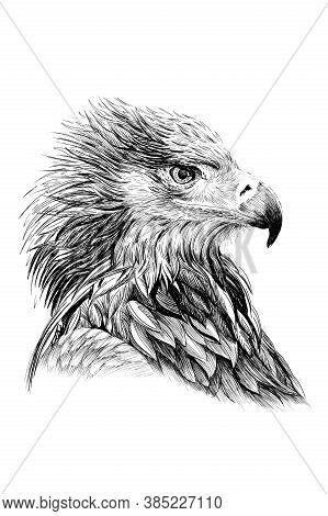 Hand Drawn Hawk Portrait, Sketch Graphics Monochrome Illustration On White Background (originals, No