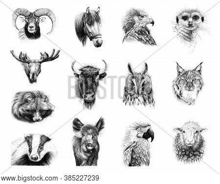 Hand Drawn Portraits Of Thirteen Animals, Sketch Graphics Monochrome Illustration On White Backgroun