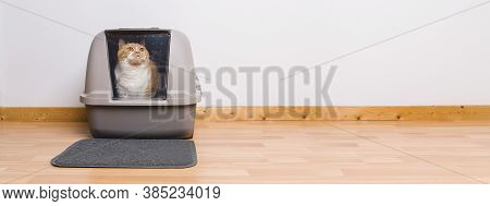 Tabby Cat Sitting In A Litter Box And Look To The Camera, Banner Size, Copyspace For Your Individual