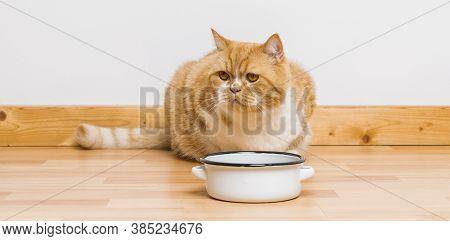 Grumpy Cat Looking At The Food Bowl