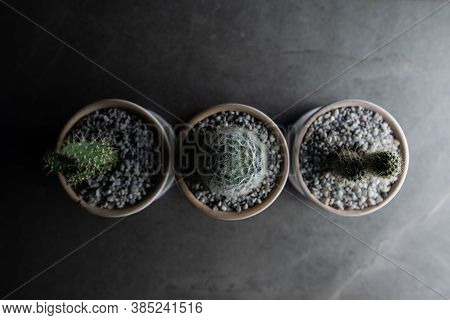 Small Cactus Placed On The Cement Floor At Night. Top View.