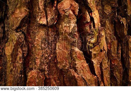 Old Relief, Wrinkled Pine Bark. Brownish, Orangey, Reddish, Yellowish Colours. Close Up Horizontal S
