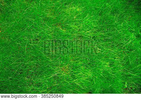 Lawn Of Fresh Long Green New Grass.