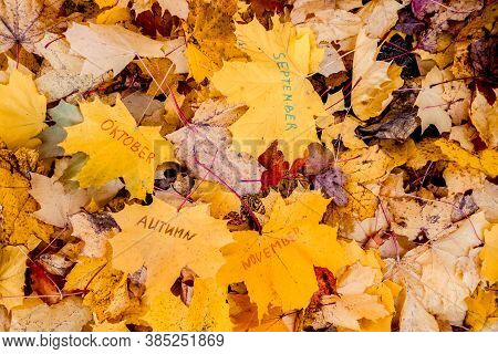 The Words September, October, November Are Written In Marker On A Yellow Maple Leaf. Hello, Septembe