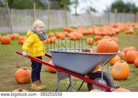 Little Boy On A Pumpkin Farm At Autumn. Preschooler Child Hold A Wheelbarrow With Pumpkins. Pumpkin