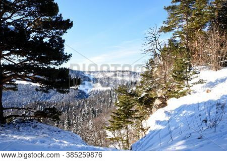 A Picturesque View Of The Mountains Overgrown With Forest And Covered With Snow. Landscape With Alpi