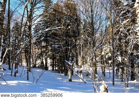 Winter Forest, Bare Trees All In The Snow. Between The Trees In The Snow On The White Snow The Road