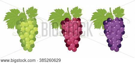 set of fresh bunch of grapes with various colors of red, green and purple, grapes isolated on white background.  grapes vector trendy and modern grapes symbol for logo, web, app, UI. grapes simple sign. grapes icon flat vector illustration