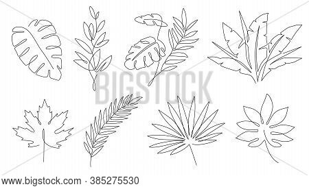 Tropical Leaves. Palm Tree And Maple Linear Leaf. Tropic Jungle And Beach Floral Abstract Elements C