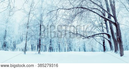 Winter forest landscape, snowy winter forest trees and snowdrifts in the winter forest. Winter snowy day scene. Colorful winter background, winter forest panorama. Winter forest nature, forest landscape in winter day
