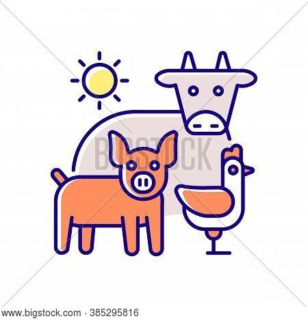 Animal Husbandry Rgb Color Icon. Farm Livestock. Breeding Cattle. Farmland Production. Pig And Chick